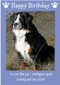 "Bernese Mountain Dog-Happy Birthday - ""I'm Just Like You"" Theme"